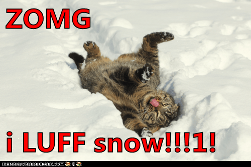 snow outside Cats
