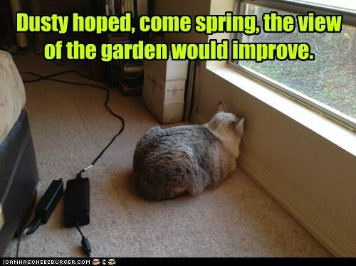 view spring garden - 7145291264