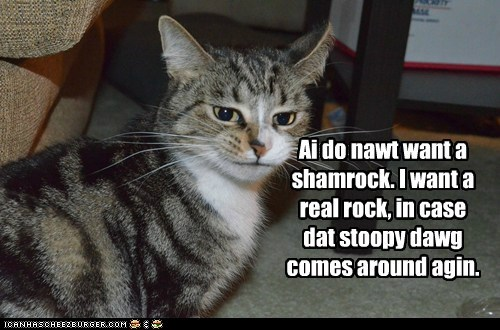 Ai do nawt want a shamrock. I want a real rock, in case dat stoopy dawg comes around agin.