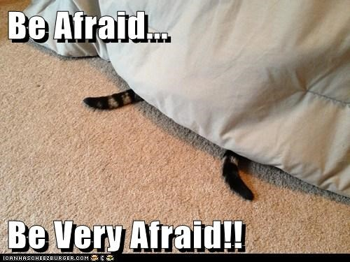 bed tails Cats - 7145434112