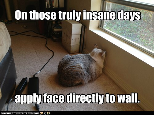 stress,Cats,wall
