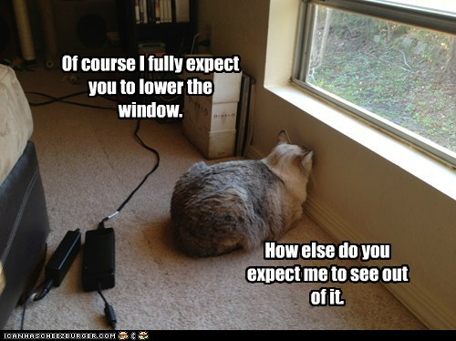 Cats wall window - 7147663104