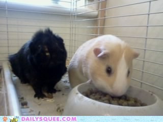 Widdle Piggies!