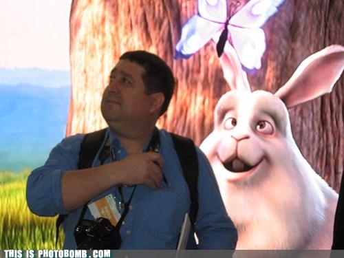 twin,bunny