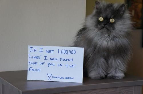 colonel meow,punch,facebook,social media,Cats