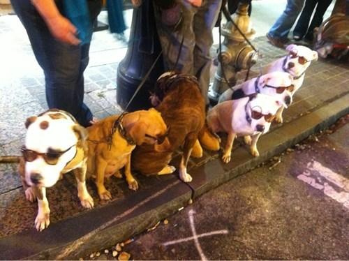 dogs sunglasses leashes - 7147832320