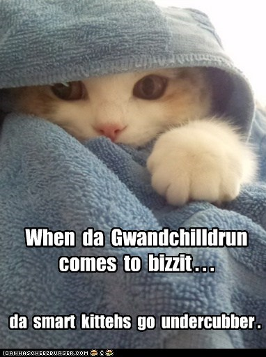 When da Gwandchilldrun comes to bizzit . . . da smart kittehs go undercubber .