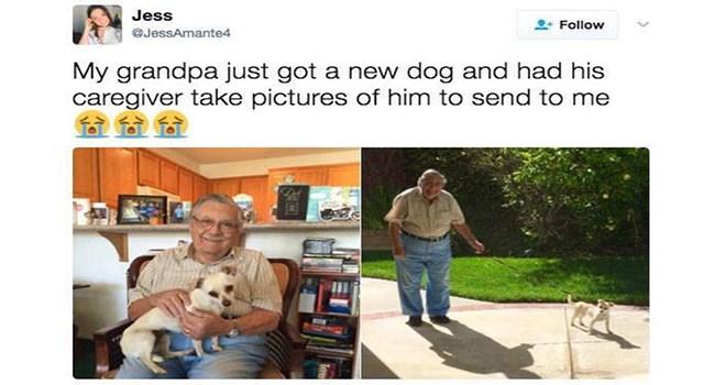 wholesome animal pics