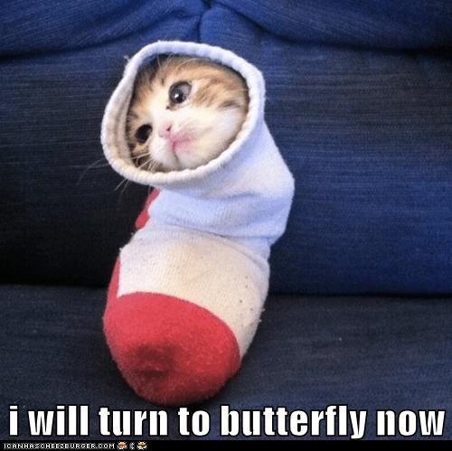 kitten butterfly Cats - 7148091136