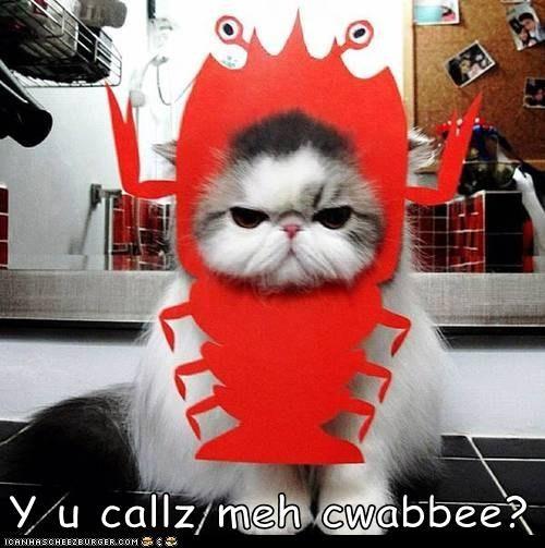 Cheezburger Image 7148098560