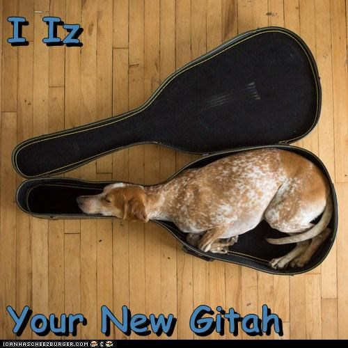 I Iz  Your New Gitah