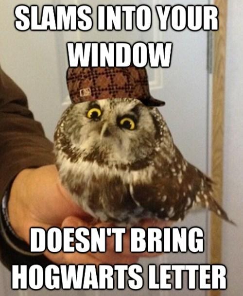 cute scumbag hat Owl - 7148195328