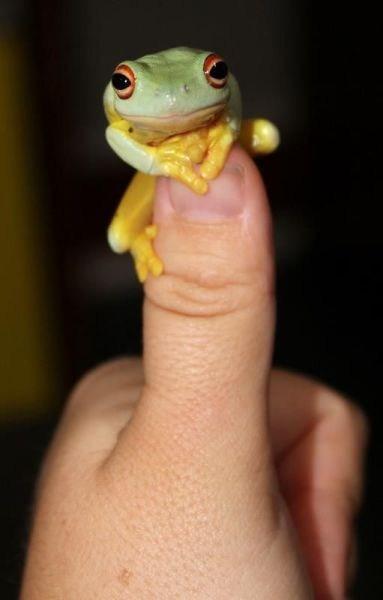 Finger Frog