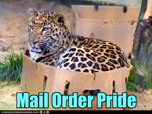 mail order bride,box