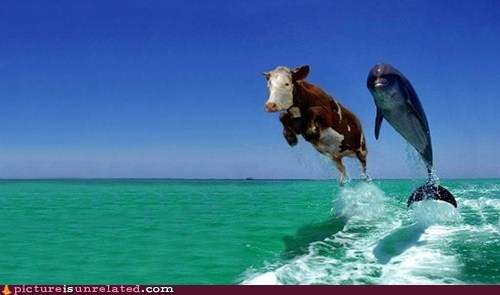 wtf dolphins cows seems legit