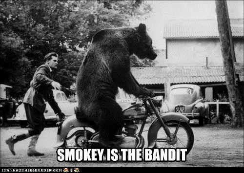 motorcycles,bears,smokey and the bandit,eastbound and down