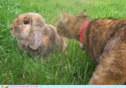 cat rabbit - 7148523520
