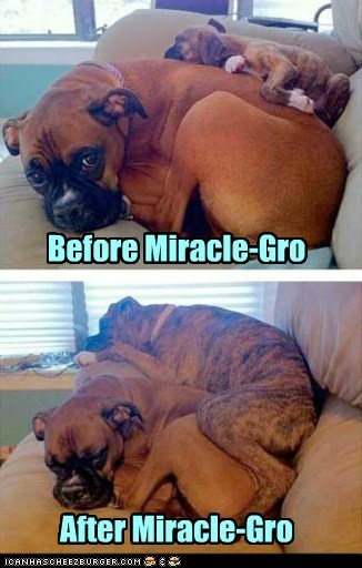 Before Miracle-Gro After Miracle-Gro