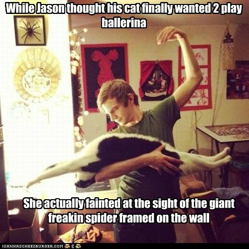 While Jason thought his cat finally wanted 2 play ballerina She actually fainted at the sight of the giant freakin spider framed on the wall