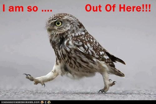 Owl animal GIFs - 7149903616