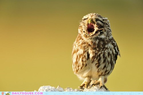 yawn,Owl,daily squee