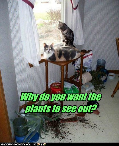Why do you want the plants to see out?