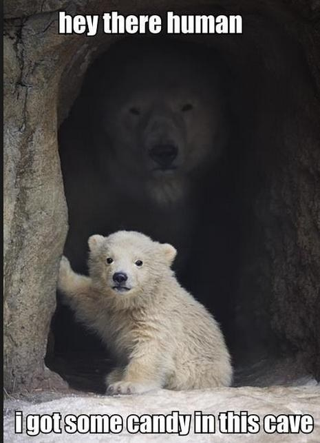 scary,polar bears,cute