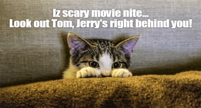 funny cat memes lolcats cute Memes Cats cat memes - 7150341