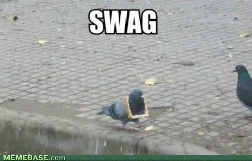 wtf,swag,bread,pigeons
