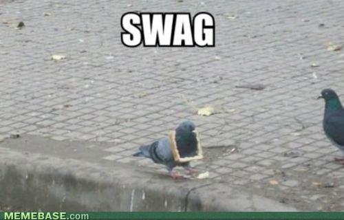 wtf swag bread pigeons - 7150387712