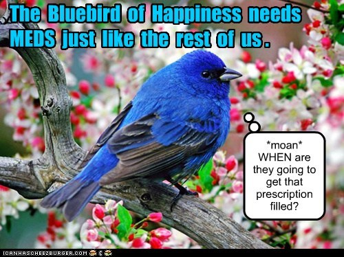 The Bluebird of Happiness needs MEDS just like the rest of us . *moan* WHEN are they going to get that prescription filled?