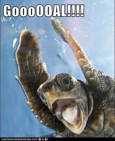 goal,turtle