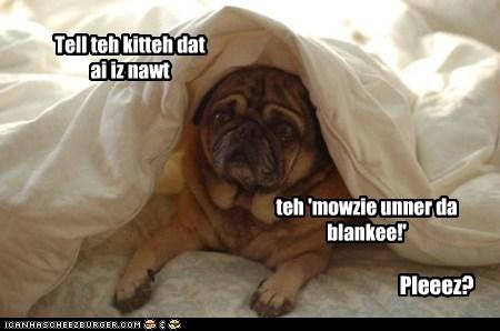 Tell teh kitteh dat ai iz nawt Pleeez? teh 'mowzie unner da blankee!'