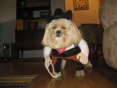 costume,cowboy