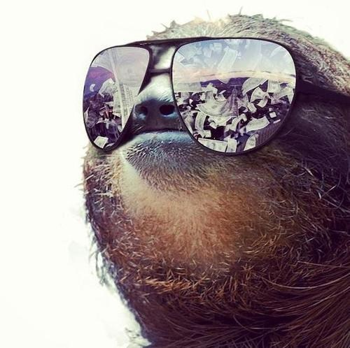 sunglasses sloths money - 7150702080