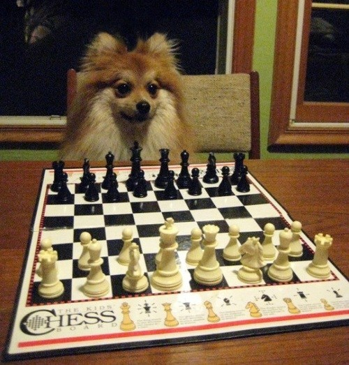 chess,i have no idea what im doing