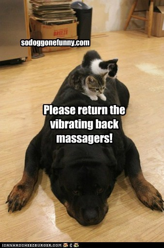 Please return the vibrating back massagers! sodoggonefunny.com sodoggonefunny,com