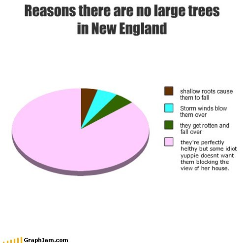 Reasons there are no large trees in New England