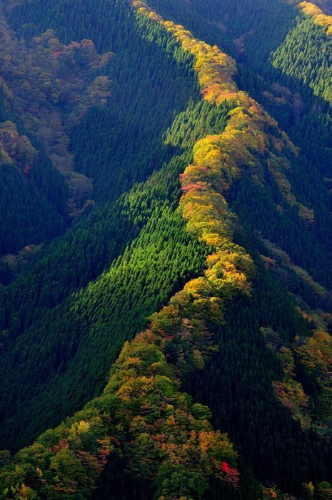 trees hills Japan landscape mountains - 7151399424