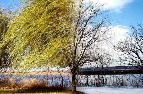 trees,photography,time lapse,winter,destination WIN!,g rated