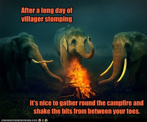 campfire,feet,elephants