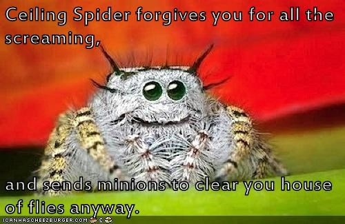 spider,misunderstood
