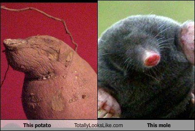mole,potato,totally looks like