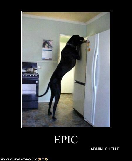 EPIC ADMIN CHELLE