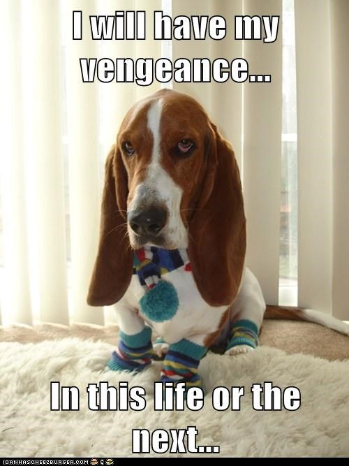scarf,socks,vengeance