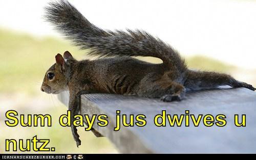 Sad squirrel nuts - 7152748544