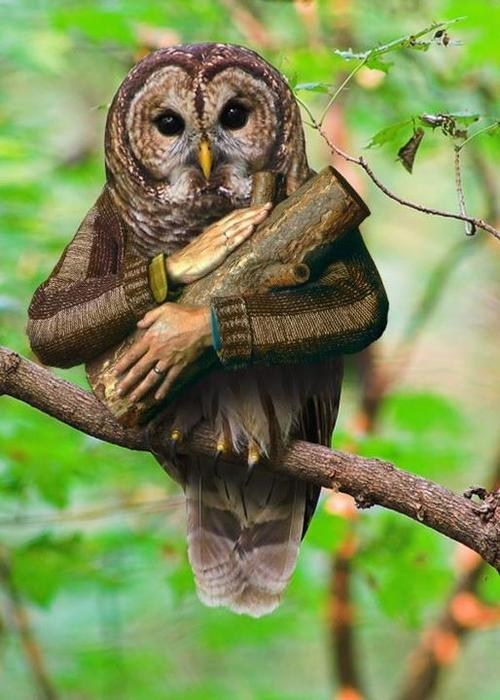 wtf log lady awesome Owl Twin Peaks