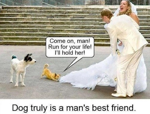 mans-best-friend dogs run got this - 7153106176