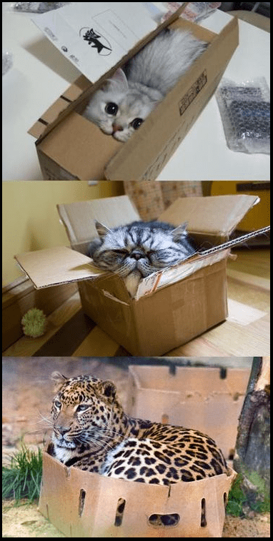 boxes - 7153124608