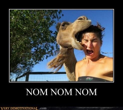 wtf camel tasty lady - 7153155840